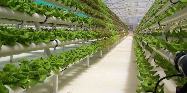 The future of Agriculture? Without land, without pesticides and with very little water