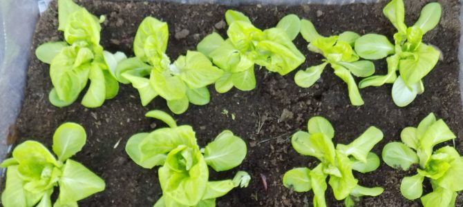 Eathink2015 and its first Romanian school gardens