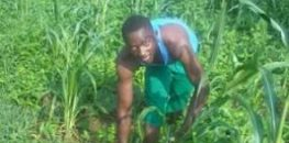 élève Kindo Assami au champ