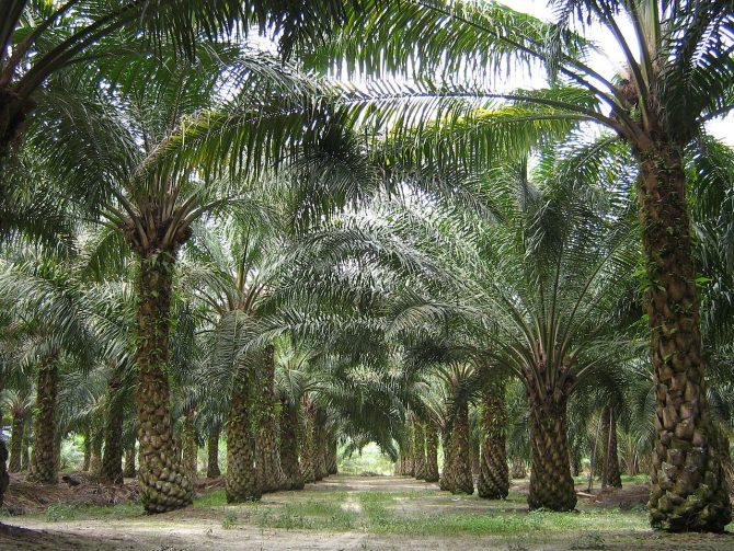abholzung regenwald wikipedia
