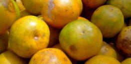fruits-prets-a-etre-transformes