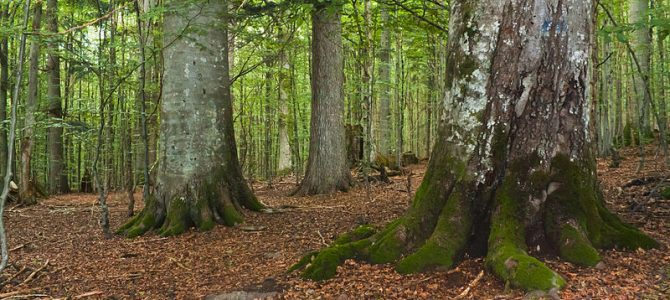 Internationaler Tag des Waldes und der Bäume