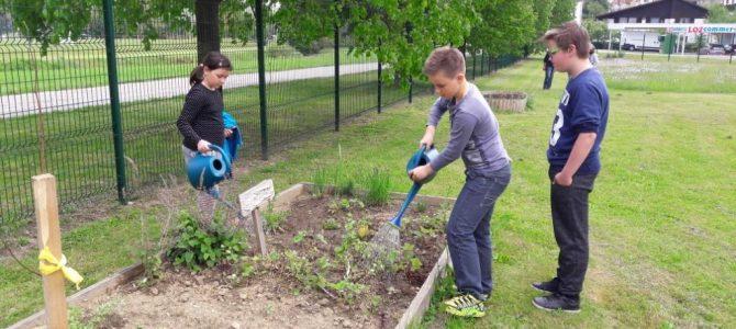 S pomočjo projekta EAThink2015 smo razširili naš eko vrt