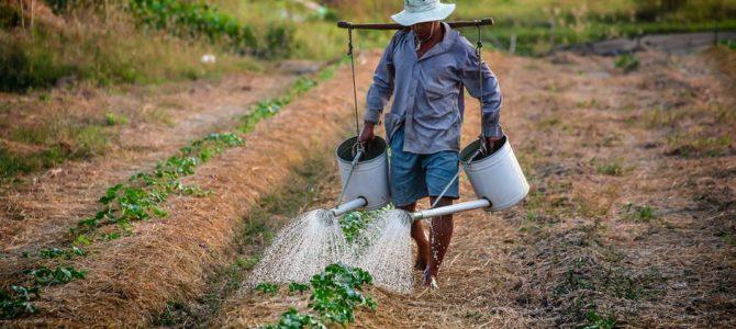 Bezpieczeństwo żywnościowe w krajach globalnego Południa – warsztat
