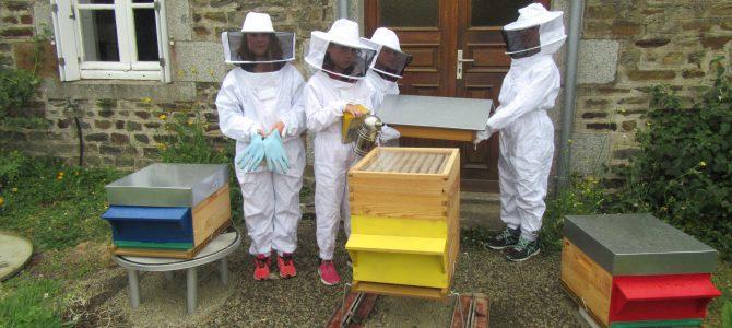Les ruchers de l'école de La Croix Avranchin