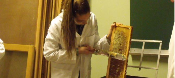 Récolte de miel au lycée des andaines par Constance et Mereleen