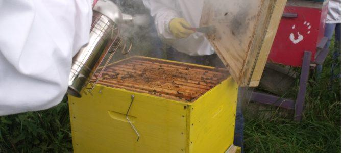 récolte de miel au lycée des andaines par Curtis et Marie-Hélène