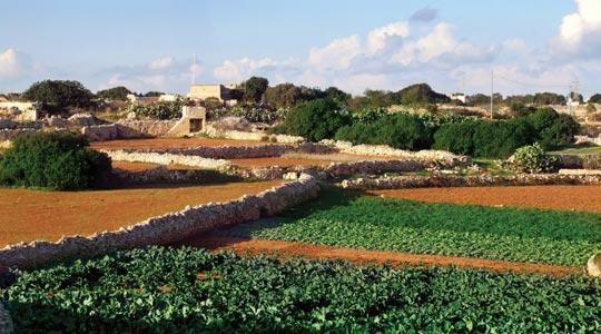 'L-aħħar bidwi' – The Last Farmer