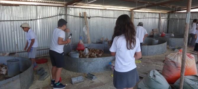 A trip to the farm in Filani village