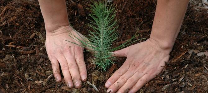 Sowing seeds of critical understanding in schools