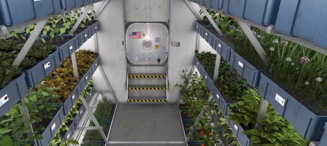 Cibo del futuro e futuro del cibo