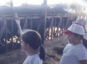 Μαθητές του Δ' Δημοτικού Αγ. Νεοφύτου Λακατάμειας επισκεφθήκαν τη Γεωργοκτηνοτροφική Εταιρεία «Λύτρα» στην κοινότητα Αθηένου