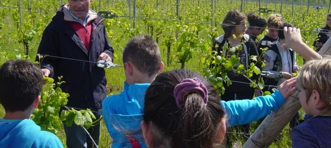 Une production végétale: le raisin