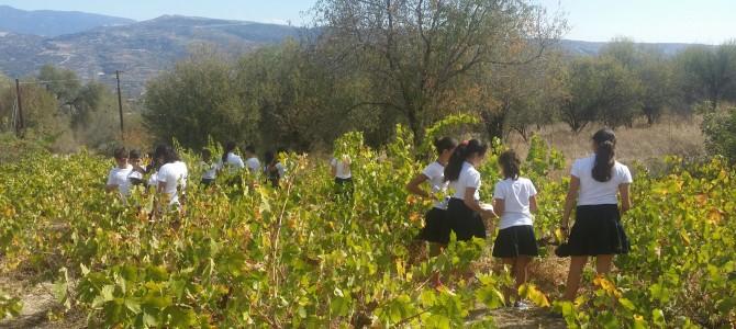 Επίσκεψη μαθητών του Δημοτικού Λινόπετρας στο  Κέντρο Περιβαλλοντικής Εκπαίδευσης Σαλαμιού