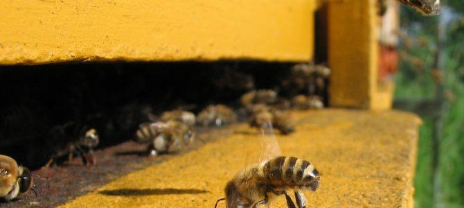 Les interactions entre l'abeille et son environnement