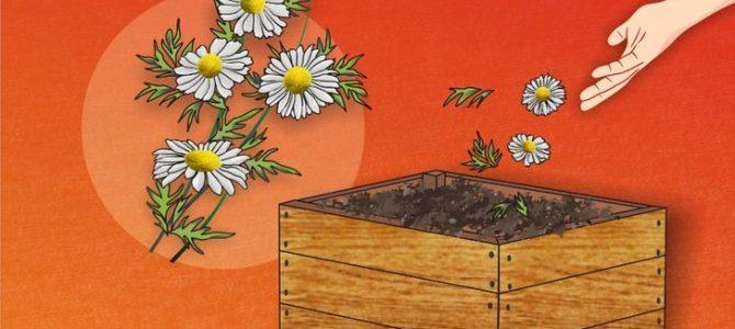 Kako uspješnije kompostirati?
