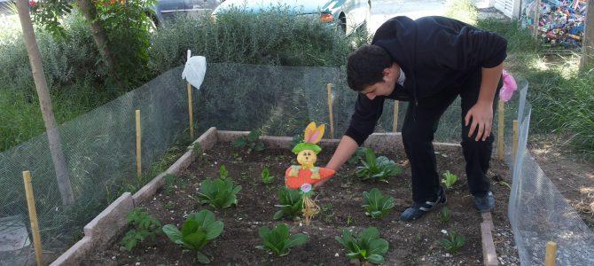 Δημιουργία Λαχανόκηπου στο Γυμνάσιο Φανερωμένης Λάρνακας