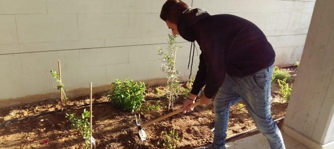 Οι μαθητές δημιουργούν τον βοτανόκηπό τους στο Γυμνάσιο Αγίου Αθανασίου