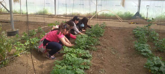 Οι εντυπώσεις των μαθητών του Δημ. Περιστερώνας από την επίσκεψη στο Riverland Dairy Bio Farm
