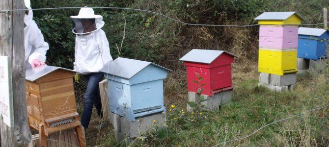 Troisième séance « Le miel et les abeilles » : récolte au lycée des Andaines !