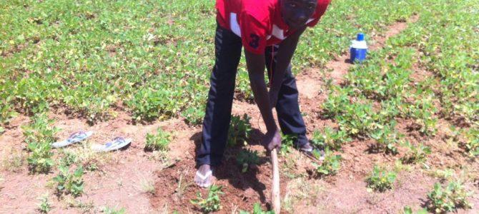 Professeur et….exploitant agricole à Ouahigouya!