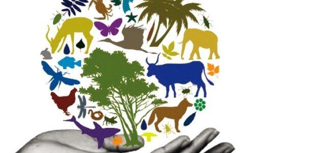 Da bi očuvali bioraznolikost moramo zaštititi okoliš
