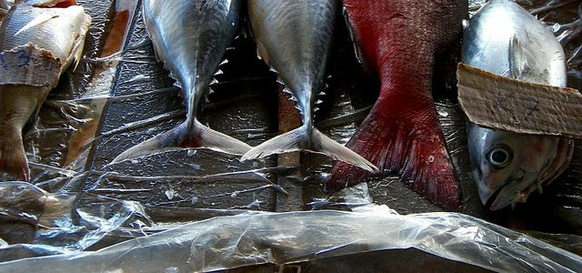 Non sapete più che pesci prendere?