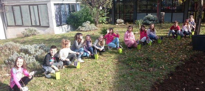 Vrijeme je dozvolilo sadnju aronije u školskom vrtu (OŠ Čavle)