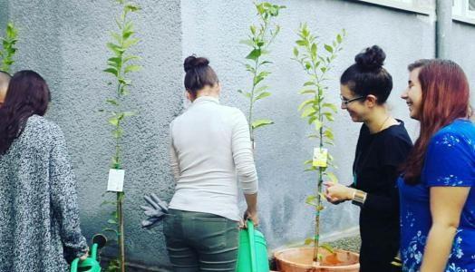 Žuta i mirisna stabla mudrosti u Gimnaziji Eugena Kumičića