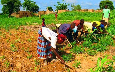 Une bonne saison agricole pointe à l'horizon du Burkina Faso!