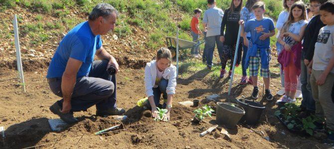U realizaciji školskog eko vrta OŠ Kostrena uskaču i druge udruge