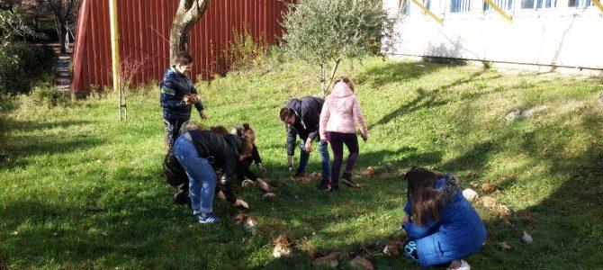 Novi eko projekt OŠ Ivana Zajca – školski vrt