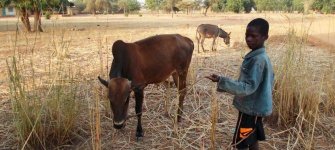 (Slovenian) Tretji del bloga o obisku učiteljev v Burkini Faso