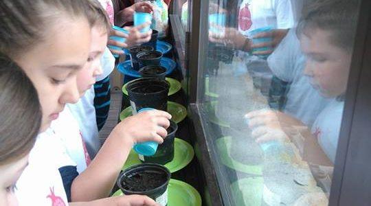 Podrška školskom vrtu – OŠ Srdoči