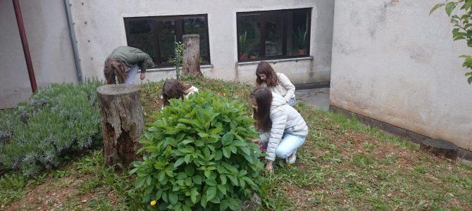 Nastavak proljetnih radova u Mediteranskom vrtu OŠ Čavle