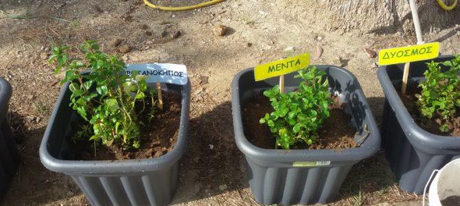 Φτιάχνουμε τον λαχανόκηπο και τον βοτανόκηπο του Δημοτικού Ασγάτας