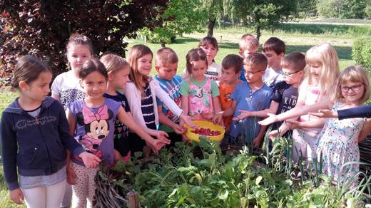 (Slovenian) Z vrta na krožnike šolarjev