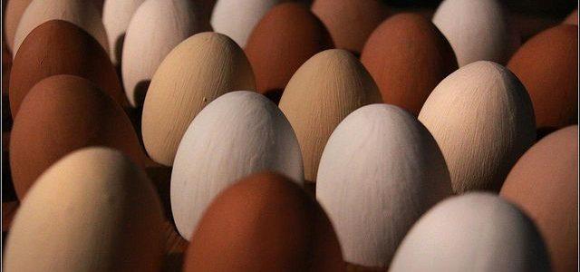 13. Oktober: Internationaler Welt-Ei-Tag