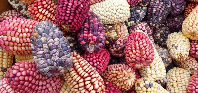Ernährung und Biodiversität (Fokus Getreide)