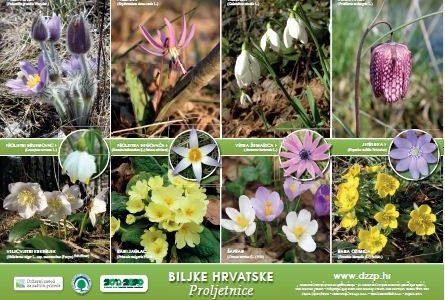 Čuvajmo proljetnice i pčelice