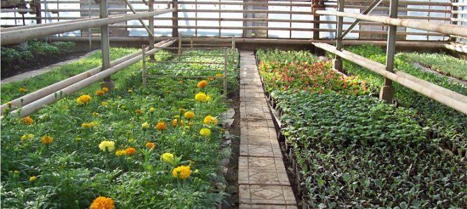 Legume sănătoase – legume gustoase