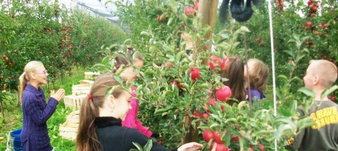 Jabuke iz školskog voćnjaka