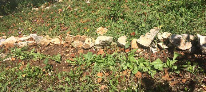 Školski vrt u OŠ Čavle hranio je i tijekom ljeta