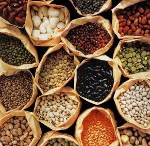 Semena upanja – raznovrstnost avtohtonih semen