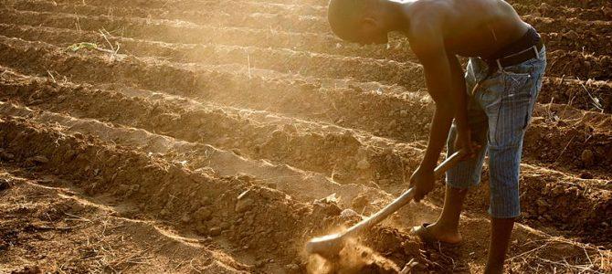 Globális élelmiszerválság