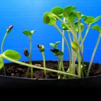 Piccoli semi crescono