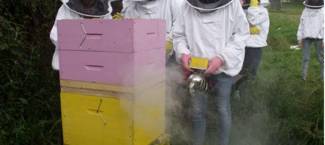récolte de miel au lycée des andaines par Laura et Candice