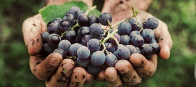 Into the wine : un fantastico viaggio dalla vigna al bicchiere