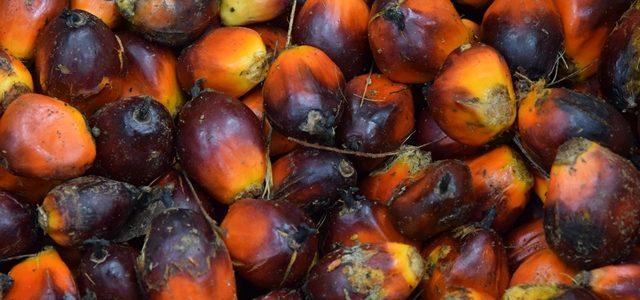 Neues Material zum Thema Palmöl